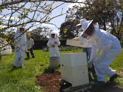 Beekeeping mentee