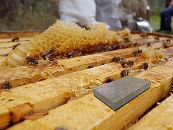 Hive Tracker.jpg