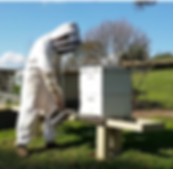 Working a bee hive.png