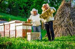 Beekeeping mentor
