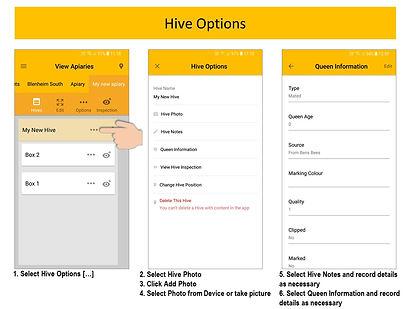 Hive Options.JPG