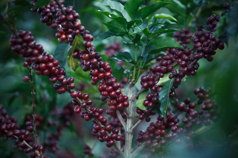 coffee-2540266_1920.jpg