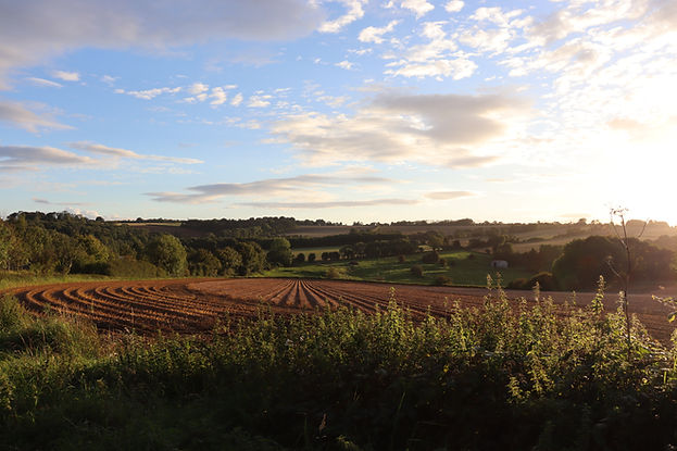 Shire Marketing Landscape