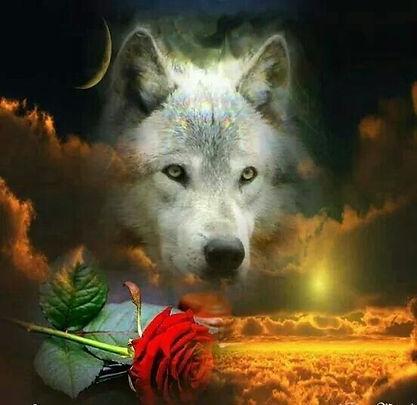wolfrose.jpg