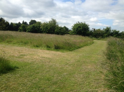 Pathway Grass Cut Ditton services