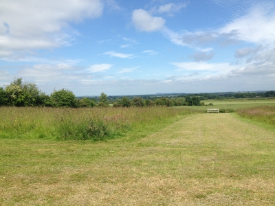 Meadow grass mowed Ditton Services