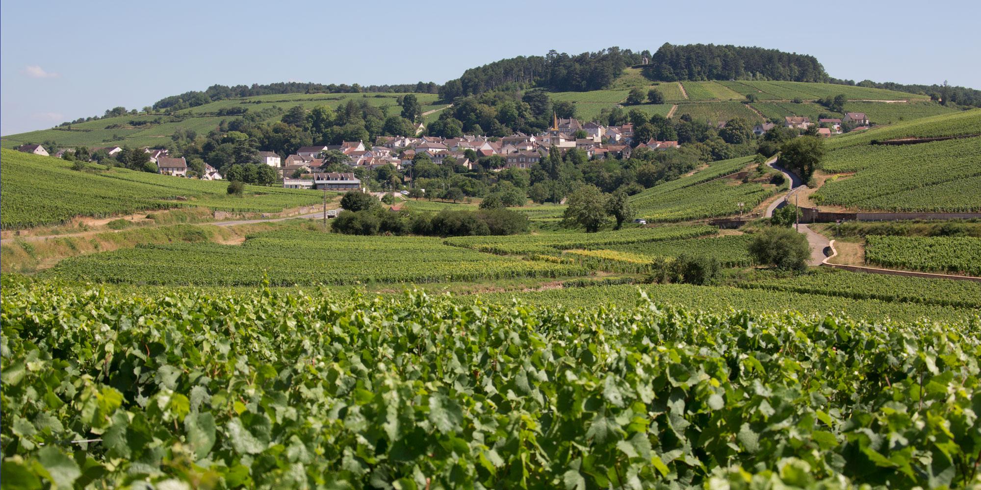 Domaine Aurélie Berthod