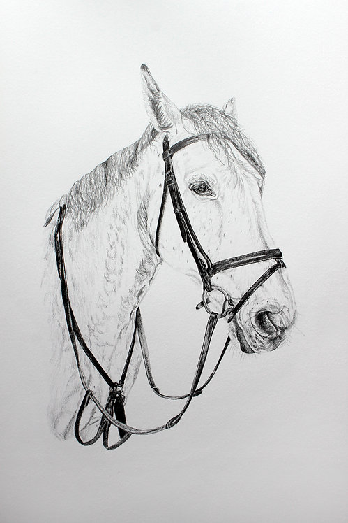 A4 Horse Drawing (unframed)