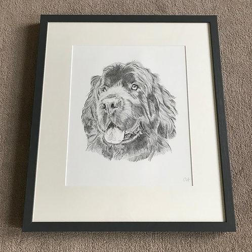 A3 Dog Drawing (unframed)