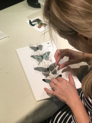 Entomology workshop