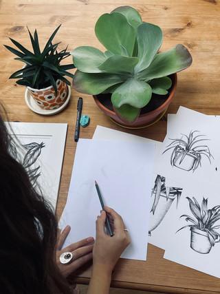 Mindful Plant Drawing Workshop