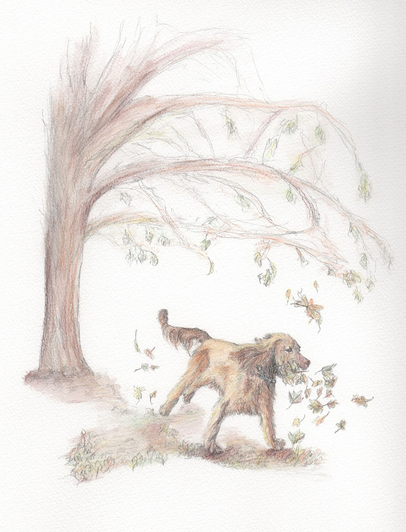 Benny Illustration