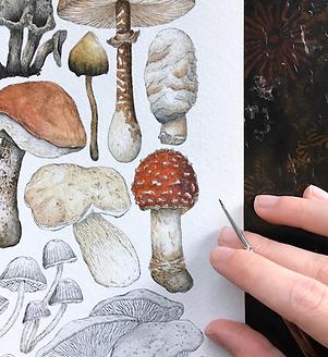 Katie Putt Illustration. Watercolour Artist London. Hand painted mushrooms.