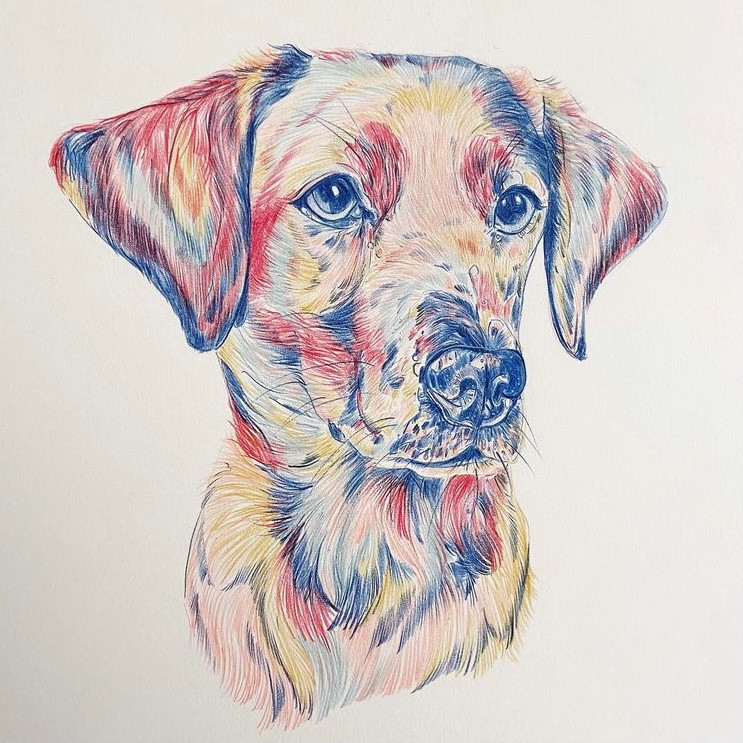 Colourful dog drawing in pencil.