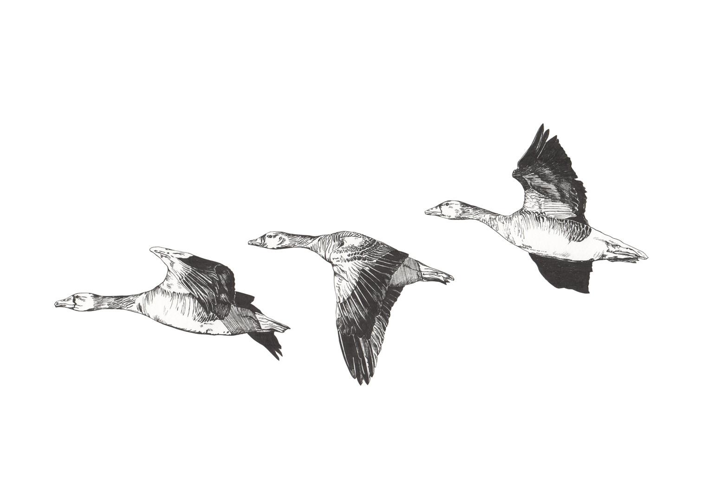 Geese Pen