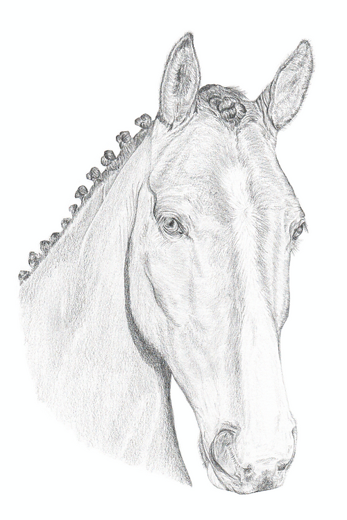 A3 Horse Drawing (unframed)