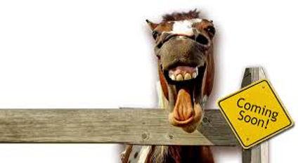 under constuction horse.jpg