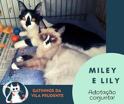 MILEY E LILY