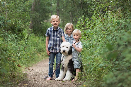 Old English Sheepdog Edmonton