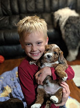 Alberta puppies for sale