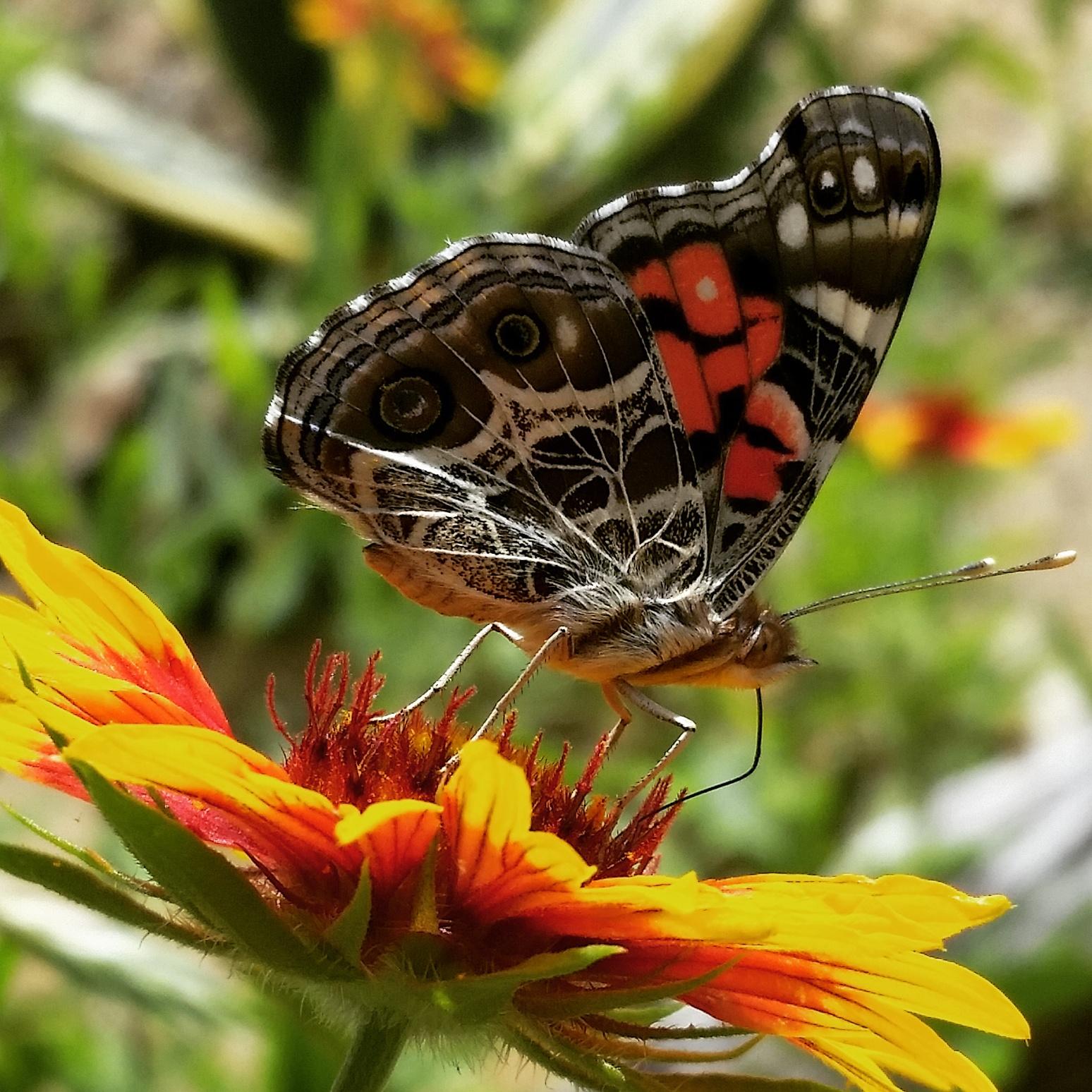 butterfly 2019