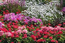 flowers-ornamental-garden-bed-22573313.j
