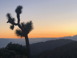 Quick Vacations: Joshua Tree