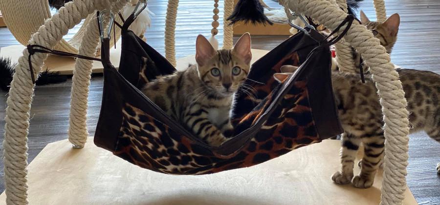 Katzen-haengematte1.jpg