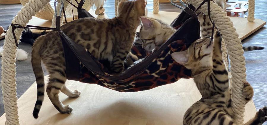 Katzen-haengematte2.jpg