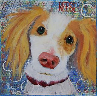 dog, dog portrait, pet portrait