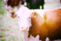 Amy-Tiller---Siwa-Beef1_edited.jpg