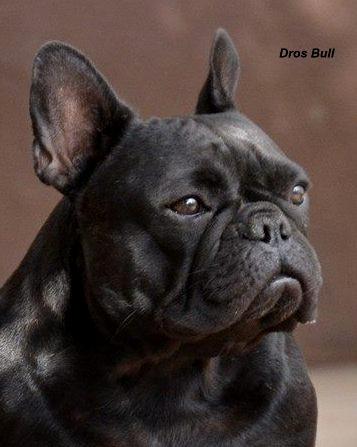 Katarina Dros Bull