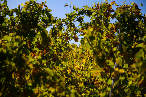 Immersions_Vigneronnes_01