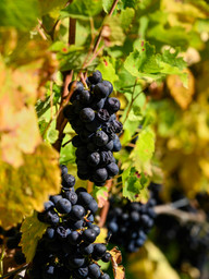 Immersions_Vigneronnes_05