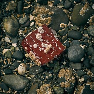 Brick at Low Tide