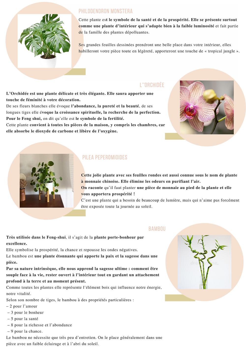 Philodendron monstera cette plante est le symbole de la santé et de la prospérité. Elle se présente surtout comme une plante d'intérieur qui s'adapte bien à la faible luminosité et fait partie de la famille des plantes dépolluantes.
