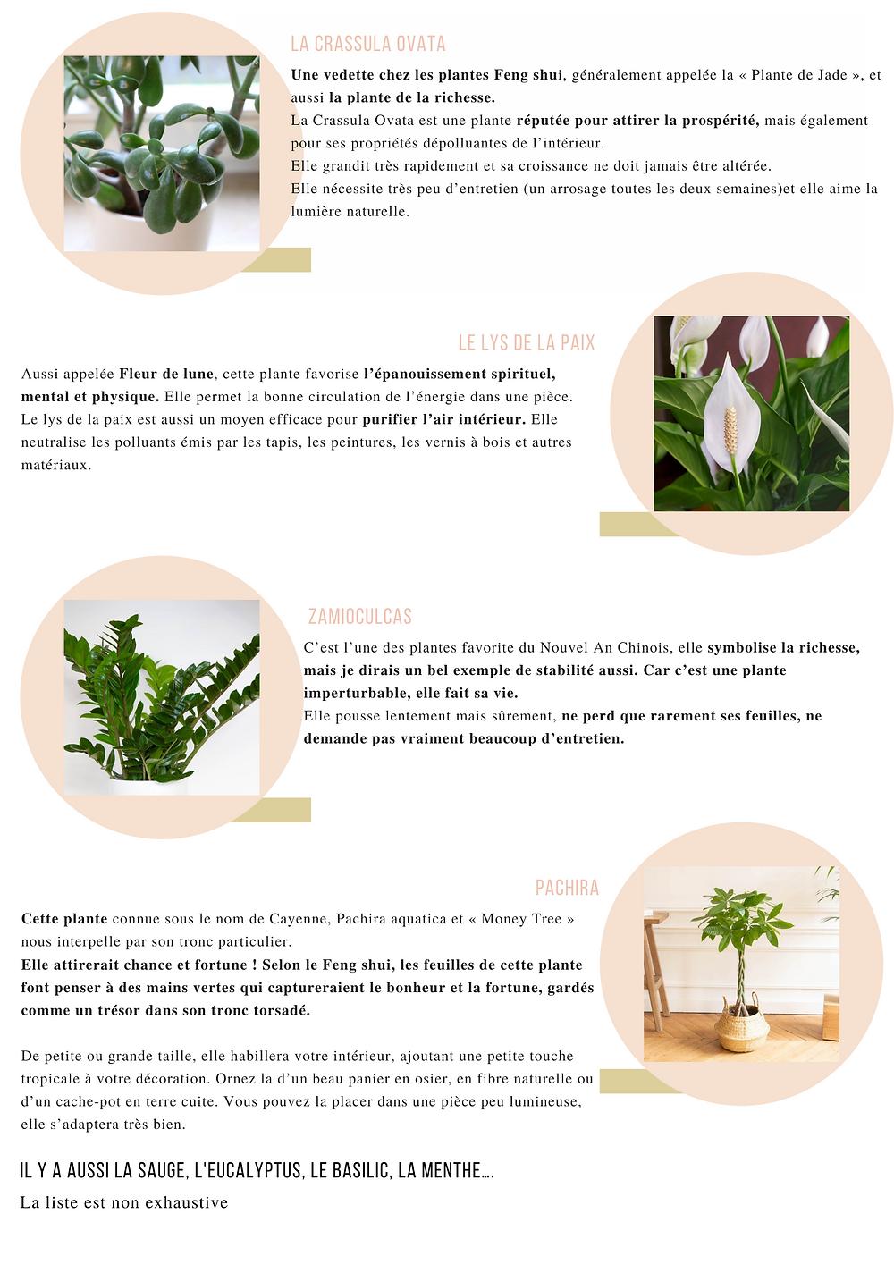 Crassula Ovata Une vedette chez les plantes Feng shui, généralement appelée la « Plante de Jade », et aussi la plante de la richesse. La Crassula Ovata est une plante réputée pour attirer la prospérité, mais également pour ses propriétés dépolluantes de l'intérieur. Elle grandit très rapidement et sa croissance ne doit jamais être altérée. Elle nécessite très peu d'entretien (un arrosage toutes les deux semaines)et elle aime la lumière naturelle.