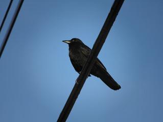 It's That Birdie Time of Year                      by Rick Haynes