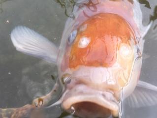 A Bit Fishy