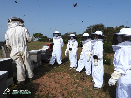 Experiencias de apicultura y observación de fauna en Sierra Morena