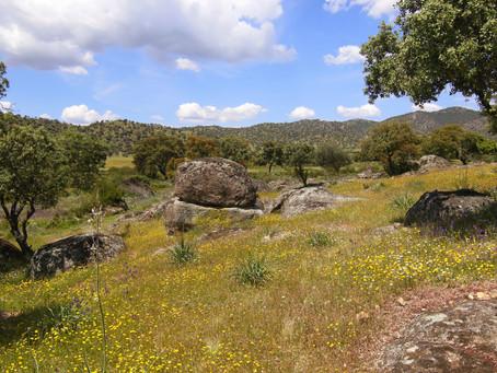 DÍA INTERNACIONAL DE LOS BOSQUES / INTERNATIONAL FORESTS DAY