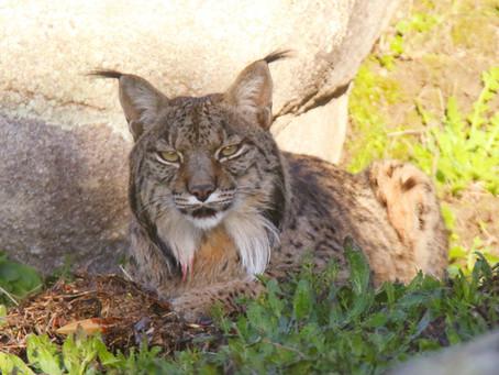 10 especies animales que ver y fotografiar en el Parque Natural Sierra de Andújar