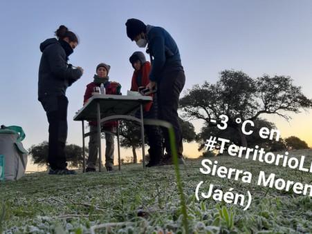 Observar fauna durante el invierno en Sierra Morena