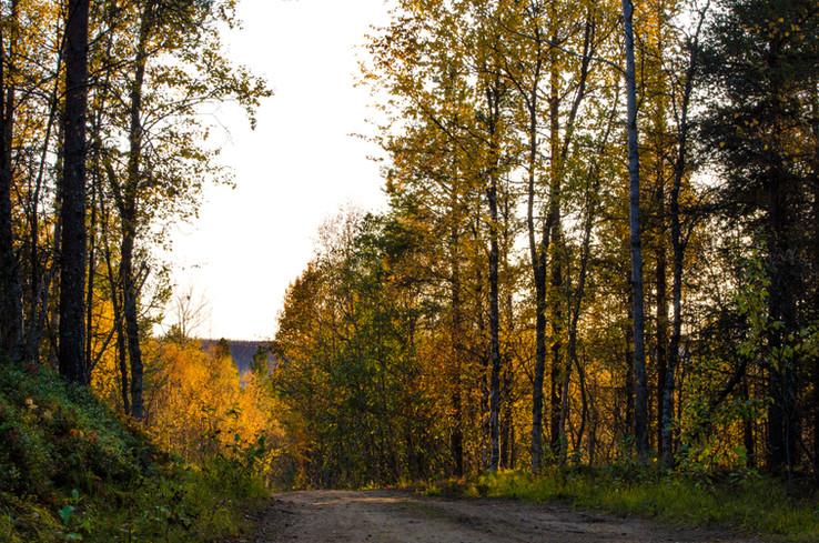 Høst i Balsfjord - Autumn in Balsfjord
