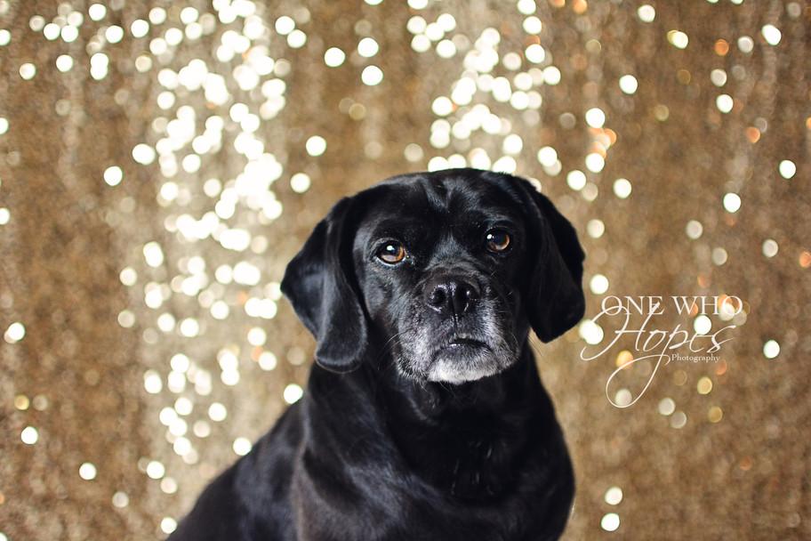 POCATELLO DOG PHOTOGRAPHER INSIDE STATION SQUARE