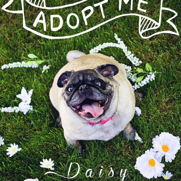 Daisy.5hs.jpg
