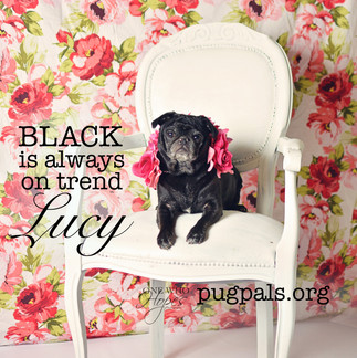 Lucy5hal.jpg