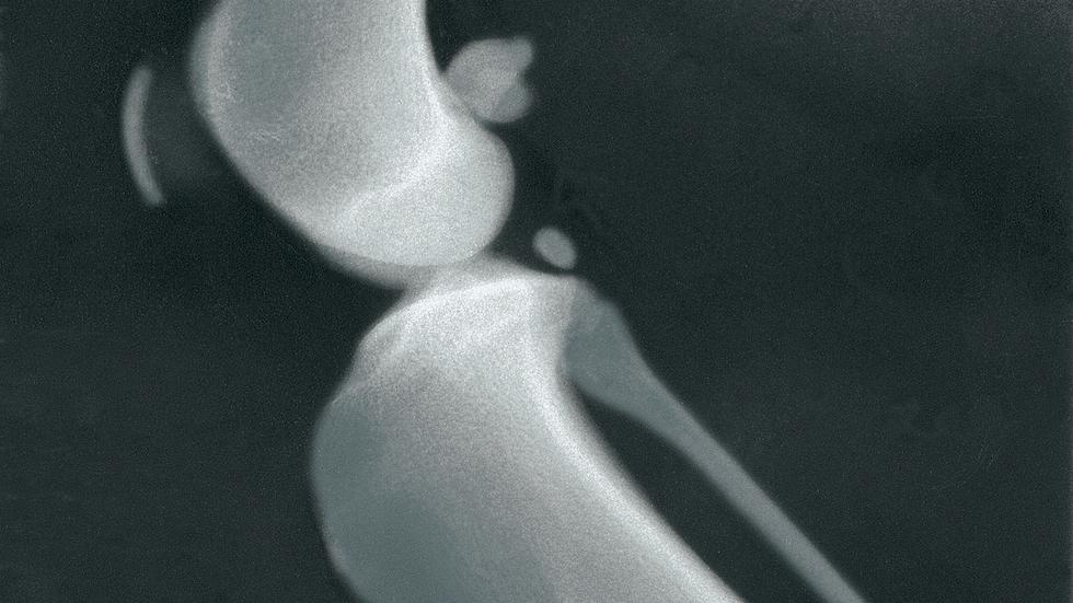 "3M™ Green Standard Veterinary X-ray Film, 14"" x 17"",1436G"