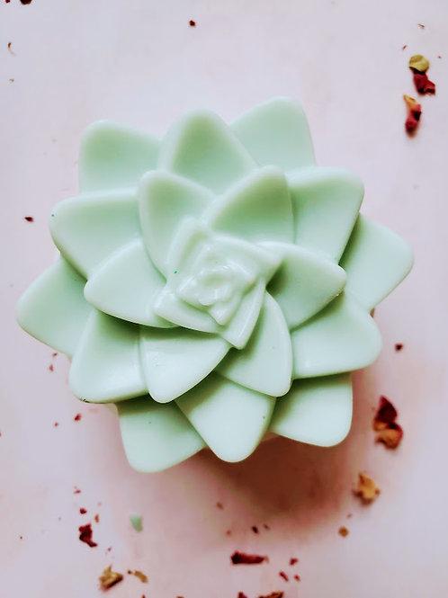 Succulent soap bars