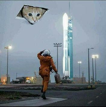cat in vent.jpg